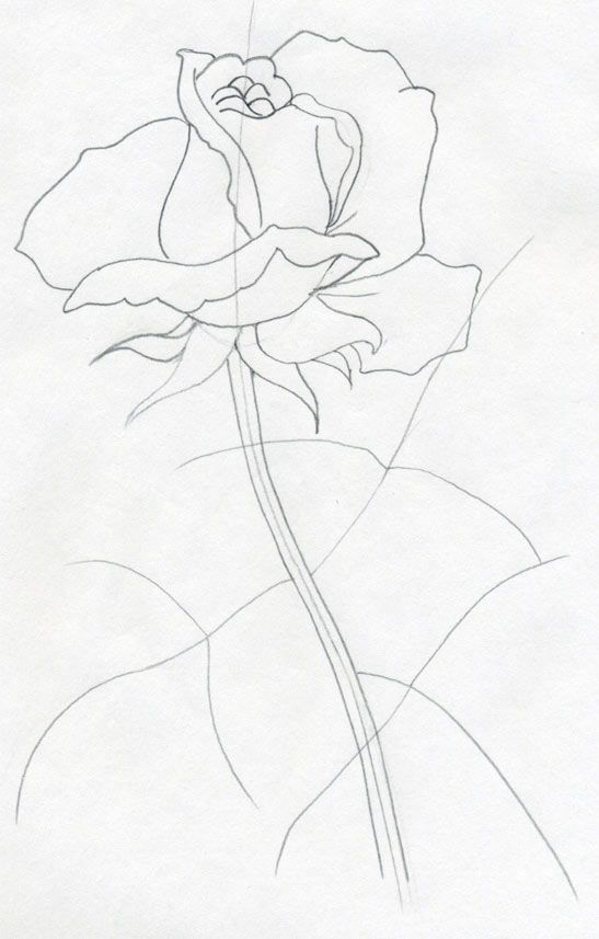 547x857 Very Simple How To Draw A Rose Step By Step Tutorial. Painting