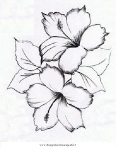 236x301 Black And White Rose Pics Rose Drawings Black White 5 Drawing