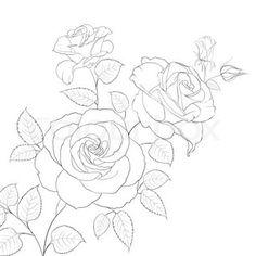 236x236 Rose Drawings