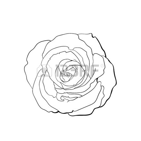 450x450 Deep Red, Ruby Rose Bud, Top View Sketch Style Vector Illustration
