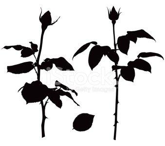 339x300 Rose Silhouettes stock vectors