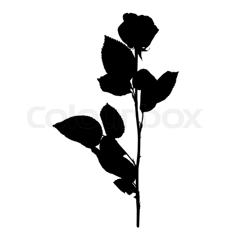 800x800 Rose Silhouette Isolated On White Stock Vector Colourbox
