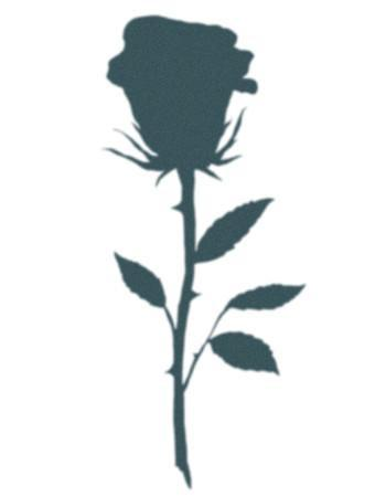 350x450 Tattooed Now! Rose Silhouette