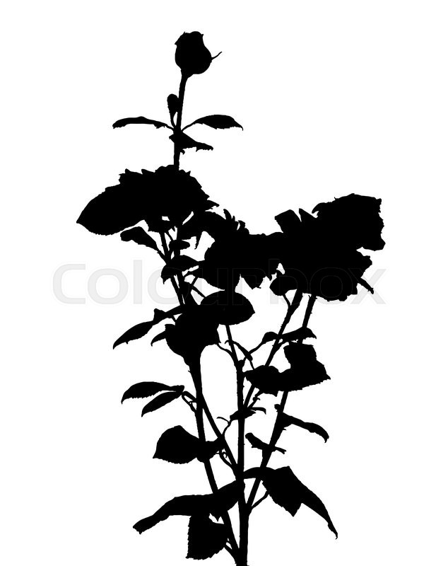 634x800 Black and White Rose Silhouette. Vector Illustration. EPS10
