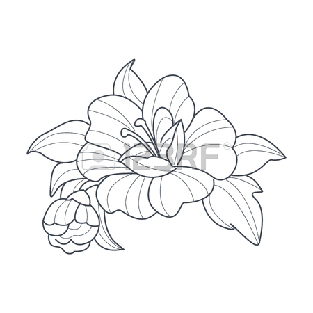 450x450 Rose Flower Monochrome Drawing For Coloring Book Hand Drawn Vector