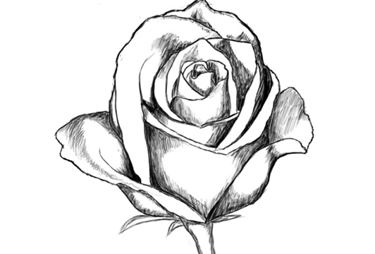 532x360 Video] How To Draw A Rose Step By Step