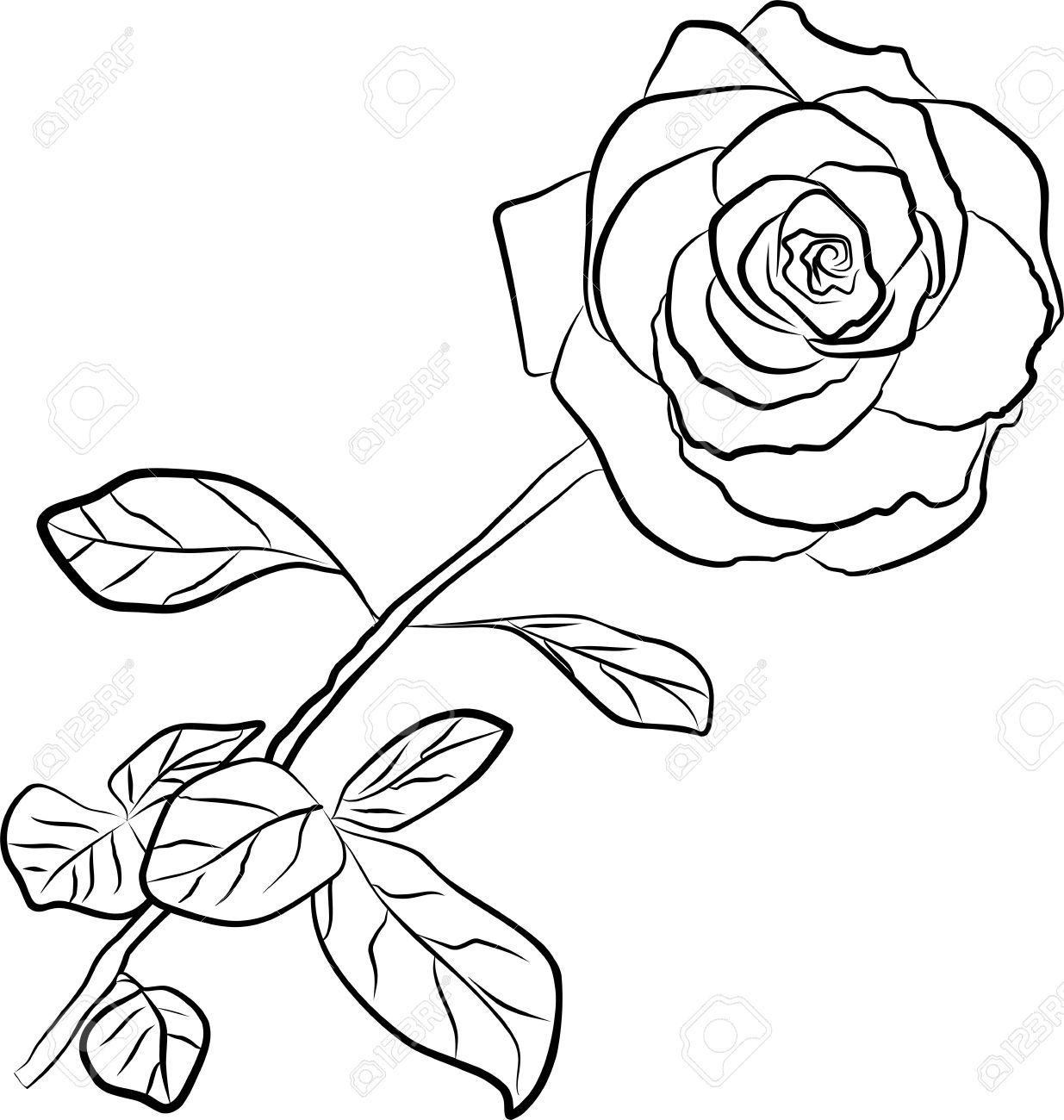 1235x1300 Outline Image Of Rose Plant Matatarantula