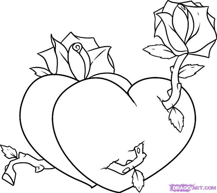 Rose Step By Step With A Heart Drawing