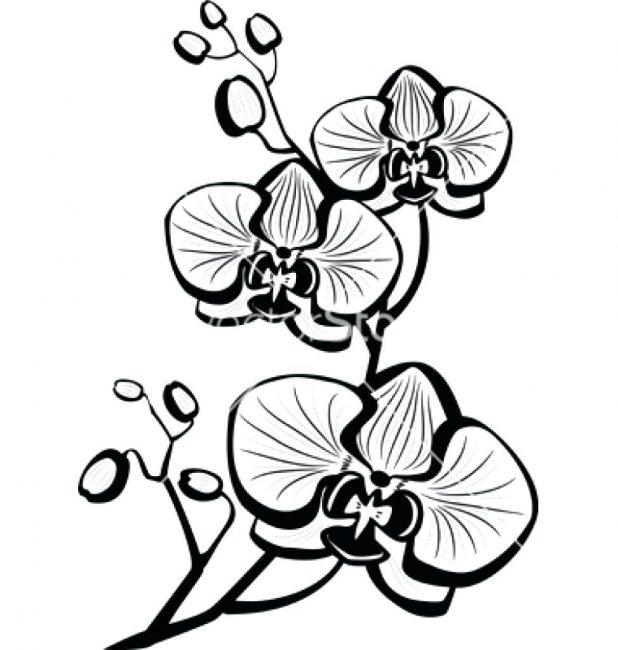 618x650 Flower Petal Outline Rose Tattoo Meaning Flowers Photos Shoulder