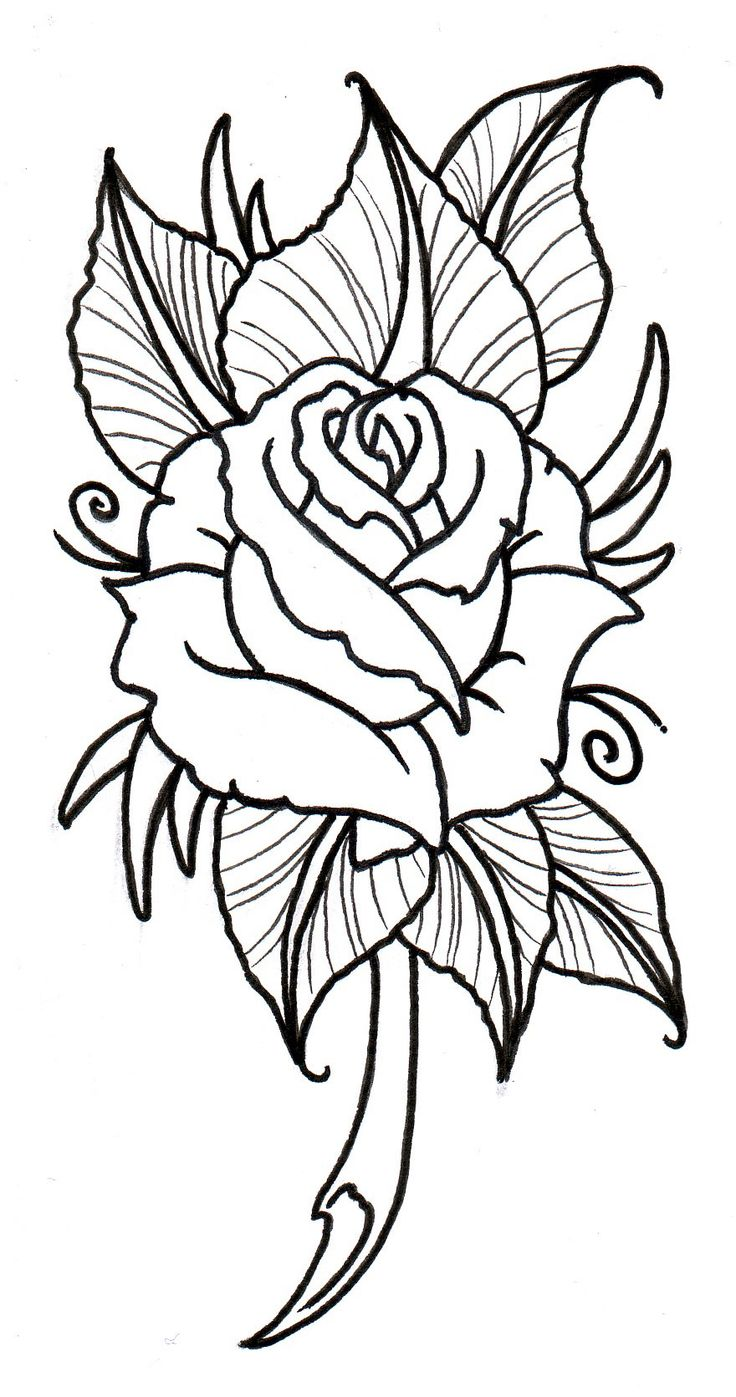 Rose Tattoo Drawing At Getdrawings Free For Personal Use Rose