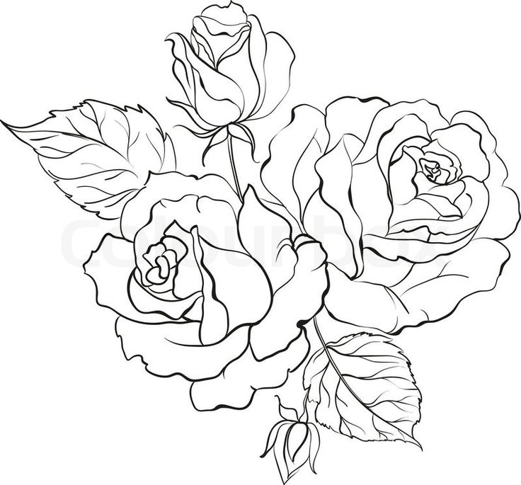 736x685 Download Rose Tattoo Line Drawing
