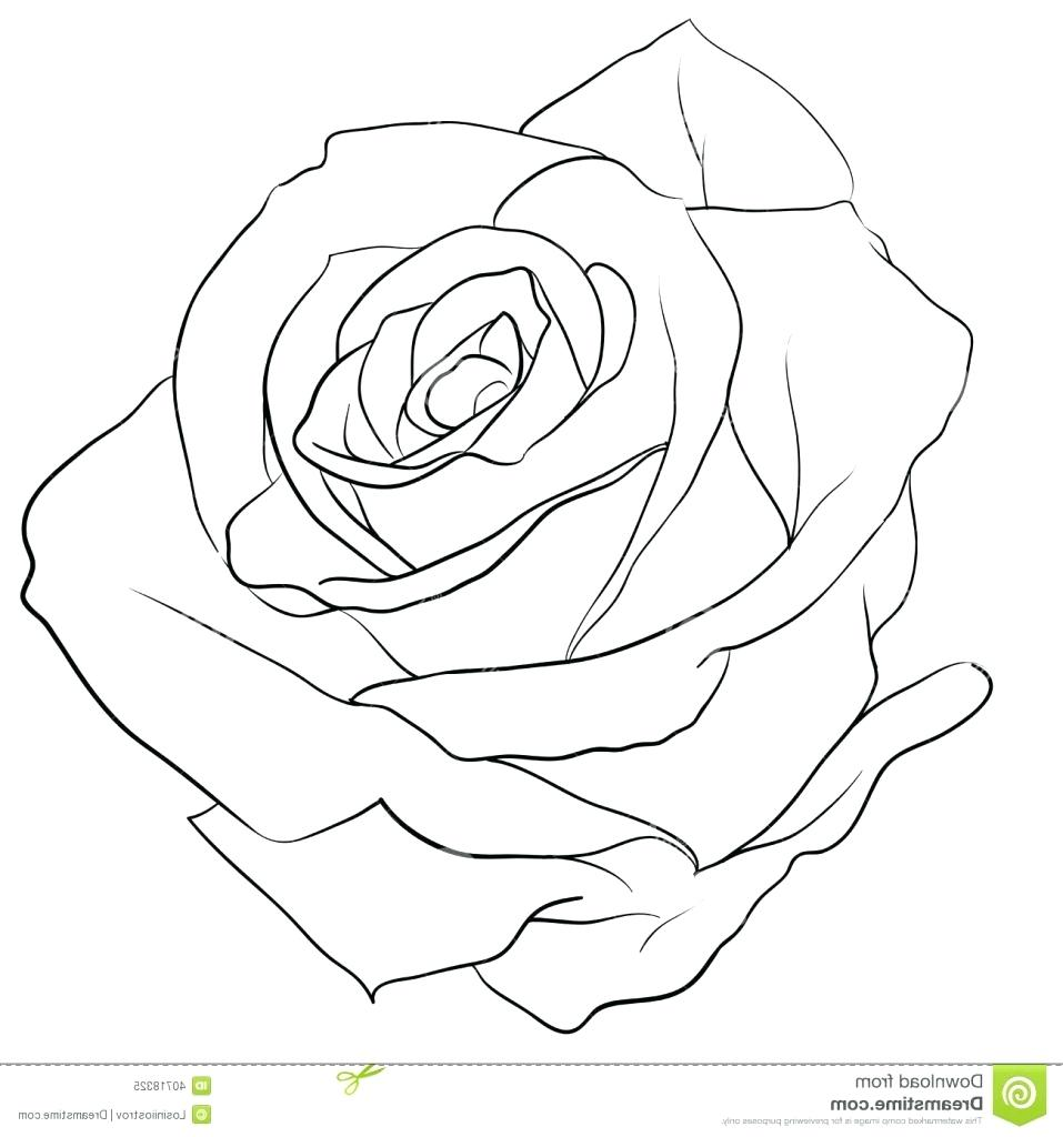 957x1024 Rose Outline Drawing O 58 Amusing Roses Tattoo Red Rose Tattoo No