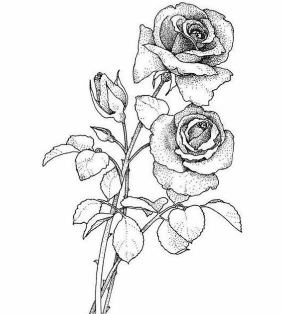 Rose Tattoos Drawing at GetDrawings | Free download