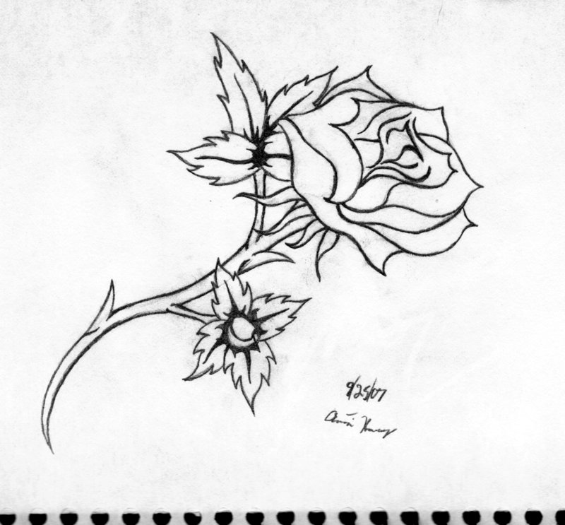 800x743 Line Art Of Rose Tattoo By Katayoku