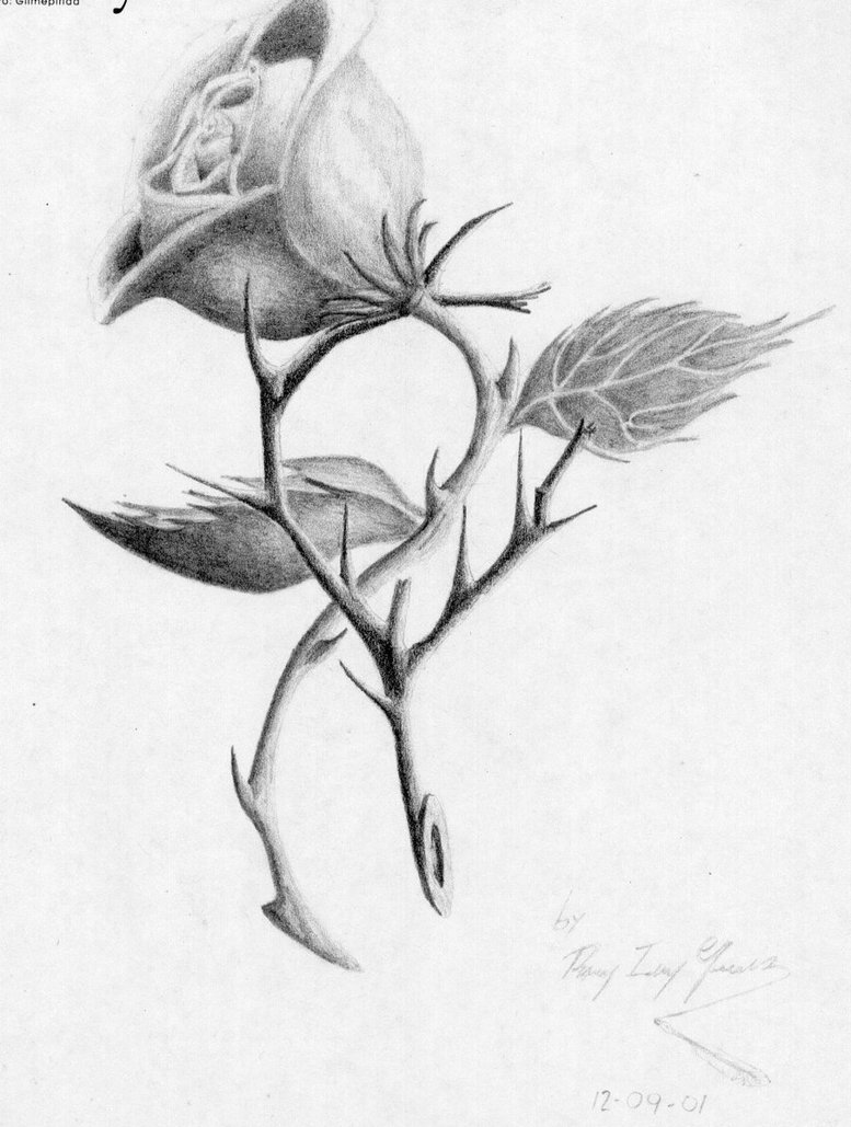 777x1029 Photos Sketches Of Roses With Thorns,