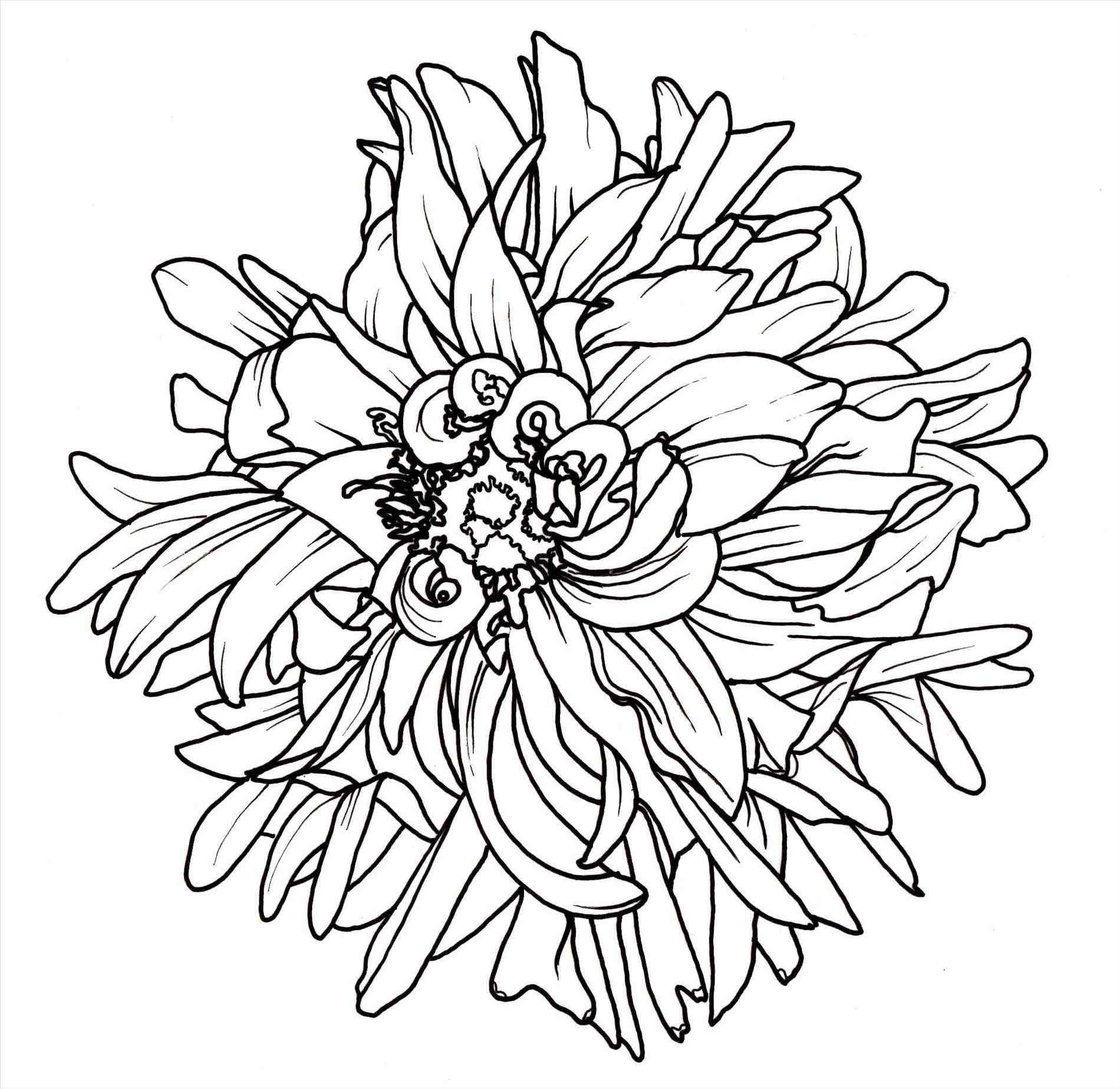 1900x1847 Flowers Drawing Easy For Kids Simple Rose Drawings In Pencil