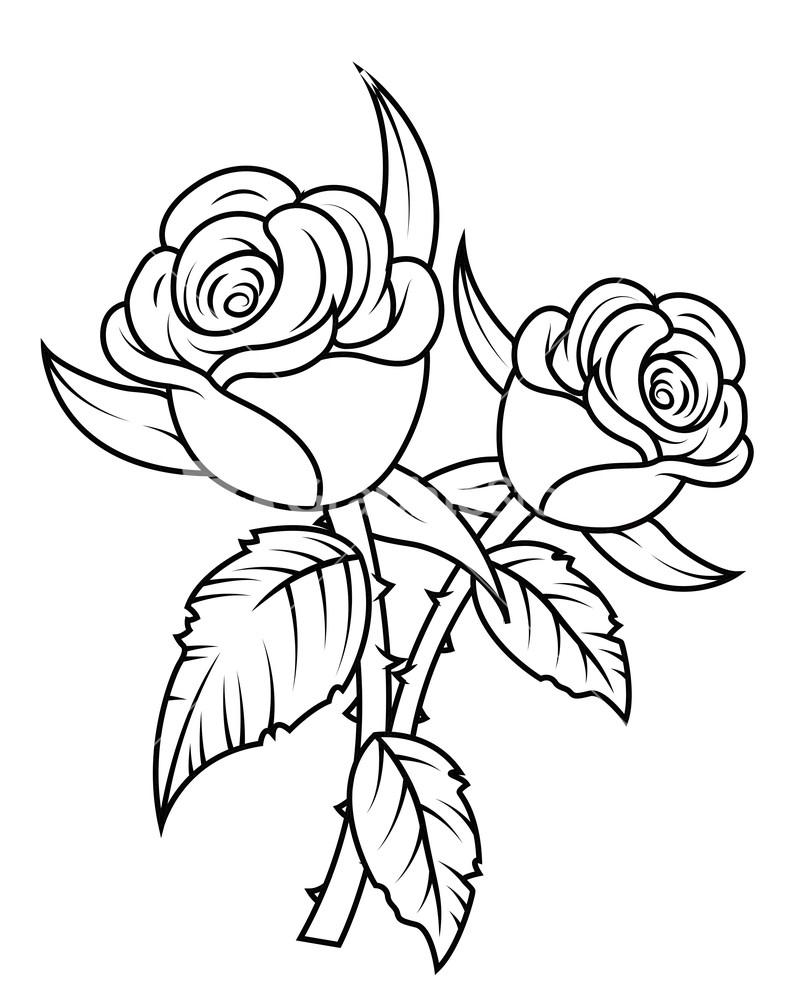 801x1000 Gulab Flower Sketch Photo Best Rose Drawings Ideas