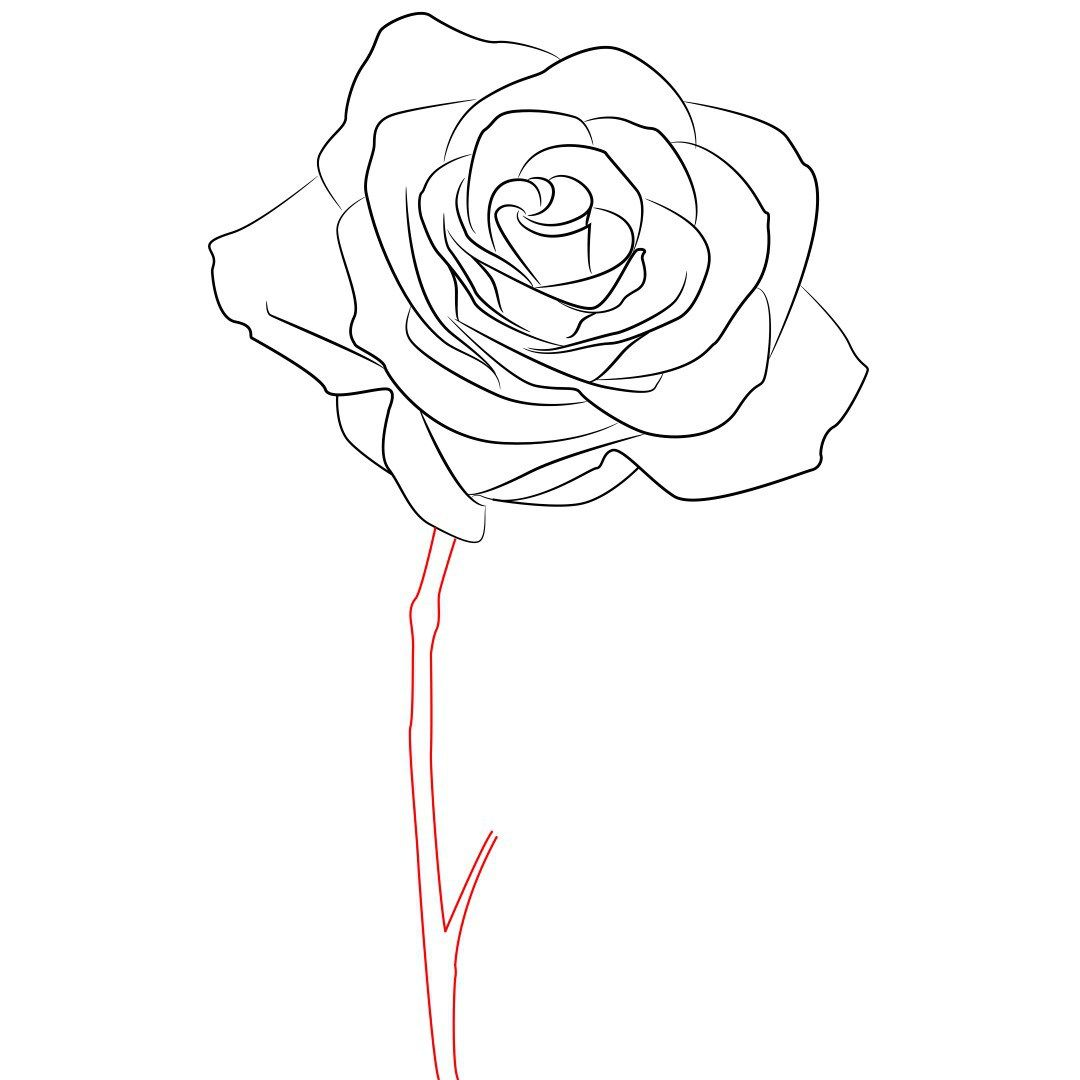 1080x1080 How To Draw A Rose Simple Step By Step Rose, Drawings And Art