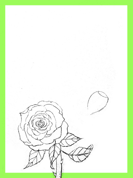516x690 How To Draw Roses