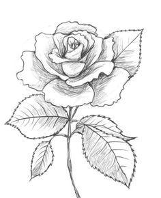 236x290 Photos Rose Drawing Image,