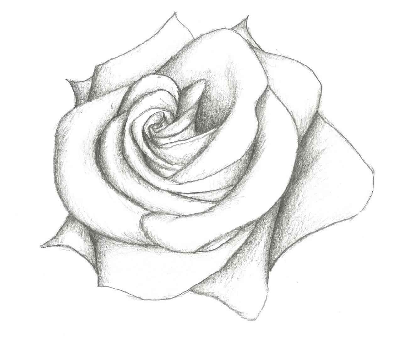 1264x1082 Pretty Flower Drawing Tutorial Tags Pretty Flower Drawing Autumn
