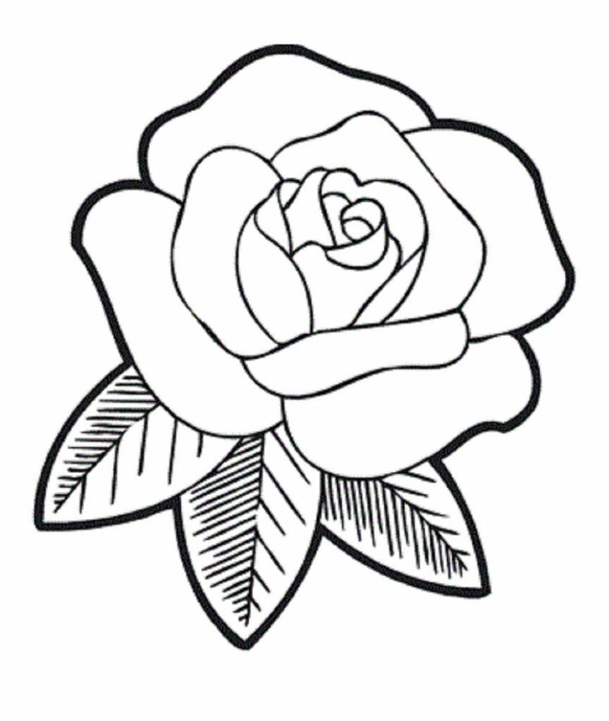 864x1024 Simple Rose Drawings Free Download Best Simple Rose Drawings