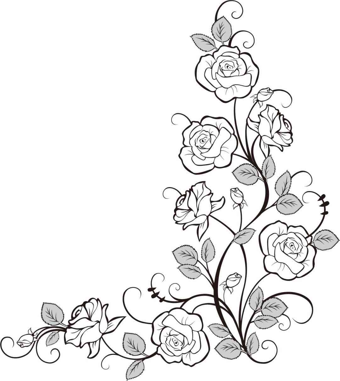 This is a graphic of Lucrative Rose Vine Drawing