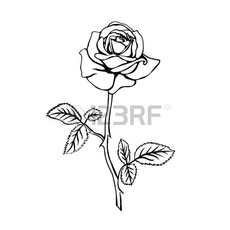 Rose With Stem Drawing
