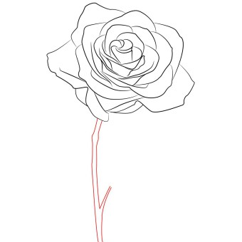 340x340 How To Draw A Rose Simple Step By Step Draw Central