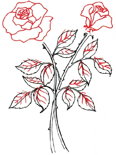 400x535 How To Draw A Rose In 5 Steps Drawings, Drawing Pics And Drawing
