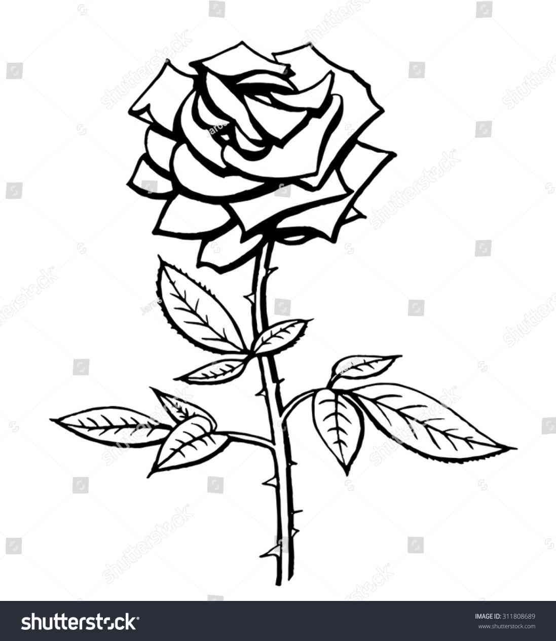 1097x1264 Of With Excellent Rose Stem Vector Black And White Stock Vector