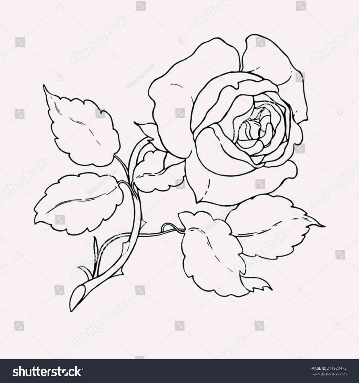 1185x1264 Red Rose With Stem Drawing Freespywarefixescom