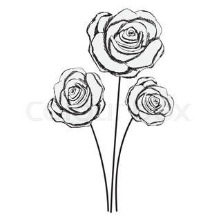 320x320 Rose Line Drawing Image Vector Illustration Design Stock Vector