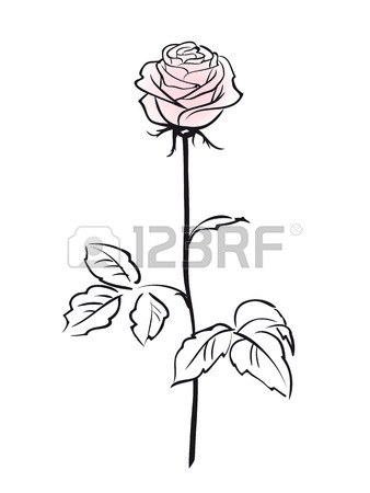 338x450 Rose. White Pink Rose Flower Outline Sketch. Isolated Rose Sign