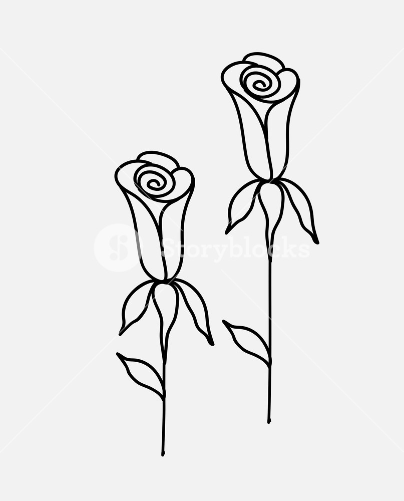 807x1000 Roses Drawings Vector Illustration Royalty Free Stock Image