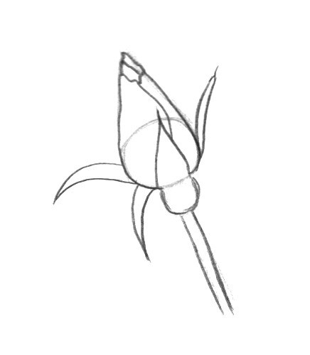 436x500 How Draw A Long Rose How