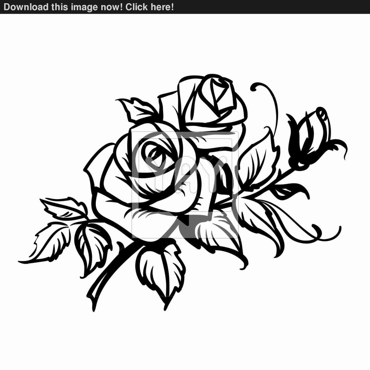 1264x1264 Roses Tattoo Design By Carrieannnn On Heart Rose Sketch