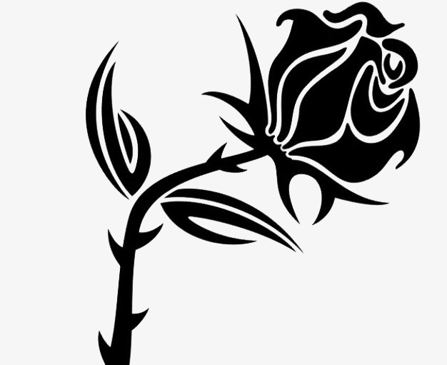 626x511 A Rose With Thorns, The Most Fascinating Dangerous, Plant, Sketch