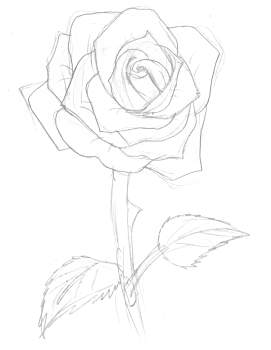 271x350 Trse How To Draw Tutorials Drawing Roses