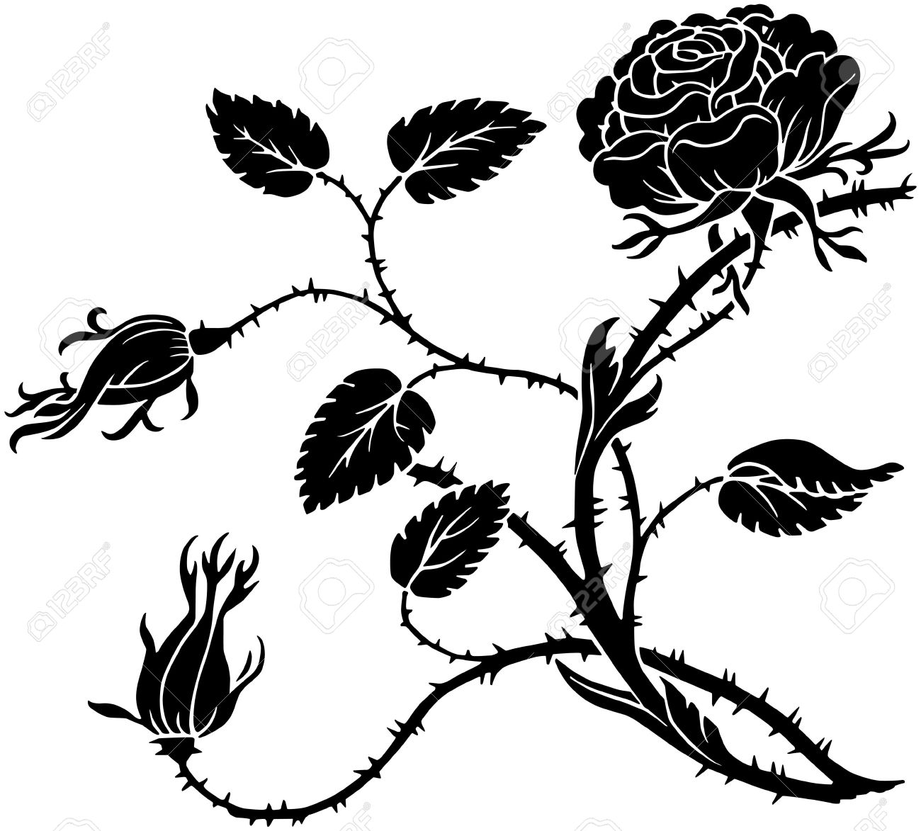1300x1173 Thorny Rose Royalty Free Cliparts, Vectors, And Stock Illustration