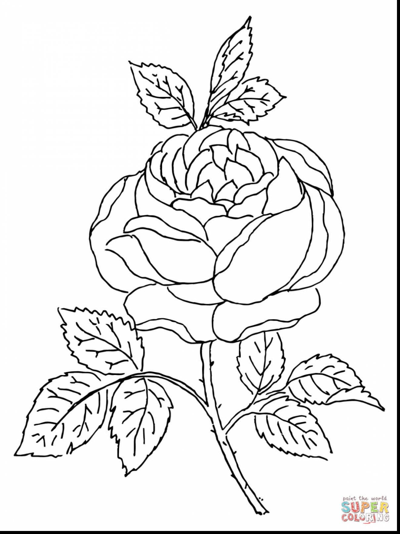 1320x1760 Breathtaking Roses Coloring Pages