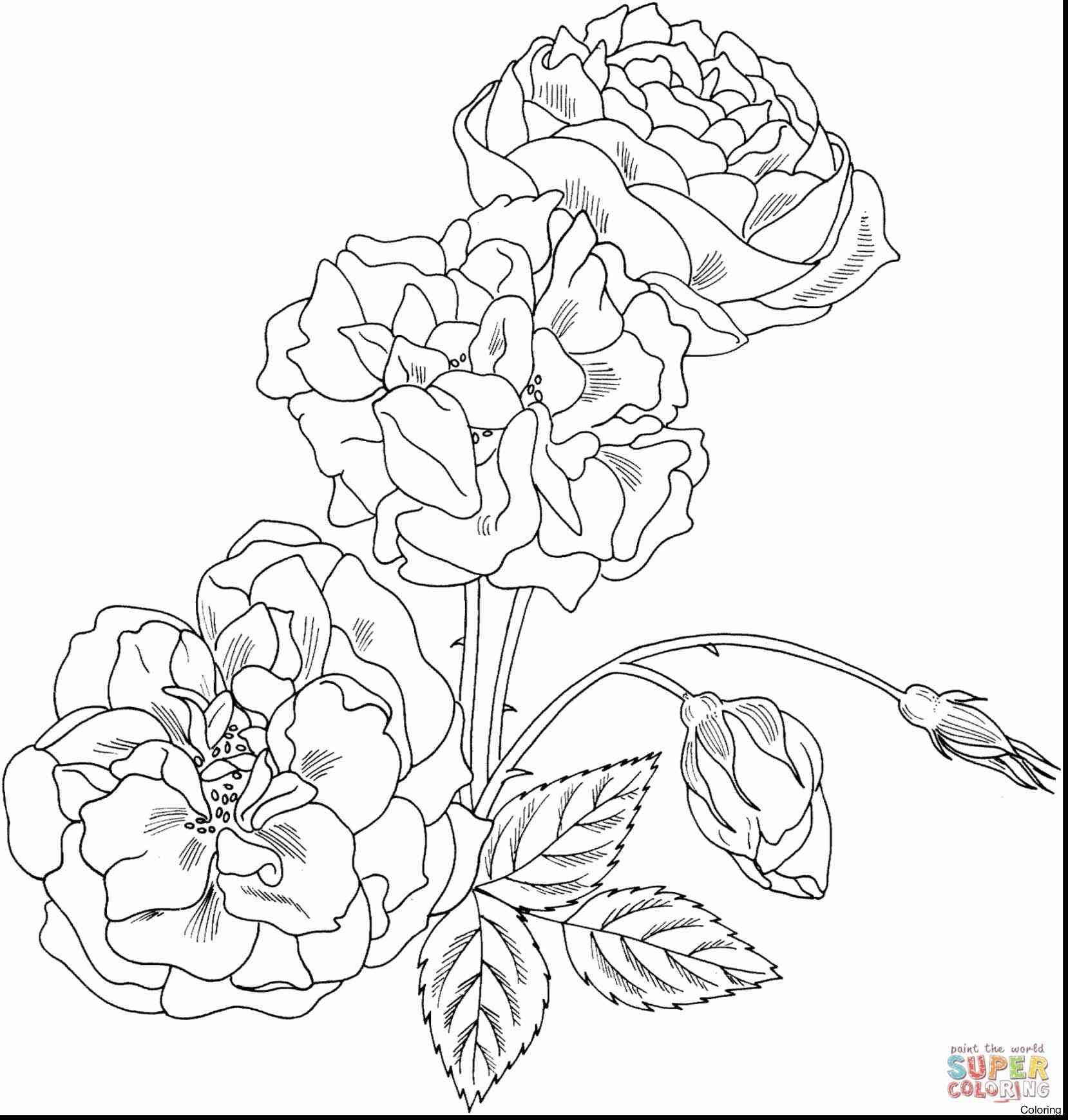 1658x1739 Drawing A Rose For Beginners Easy Roses Drawings Xrf How To Draw