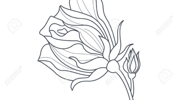 570x320 Simple Rose Bud Drawing Simple Line Drawing Rose Bud Stock Vector