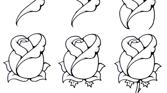 570x320 Step By Step Flower Drawing How To Draw A Rosebud My Nature Book