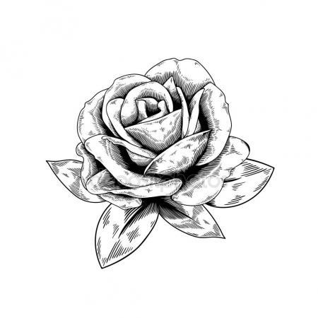 450x450 Rosebud Outline Sketch Stock Vector Rawpixel