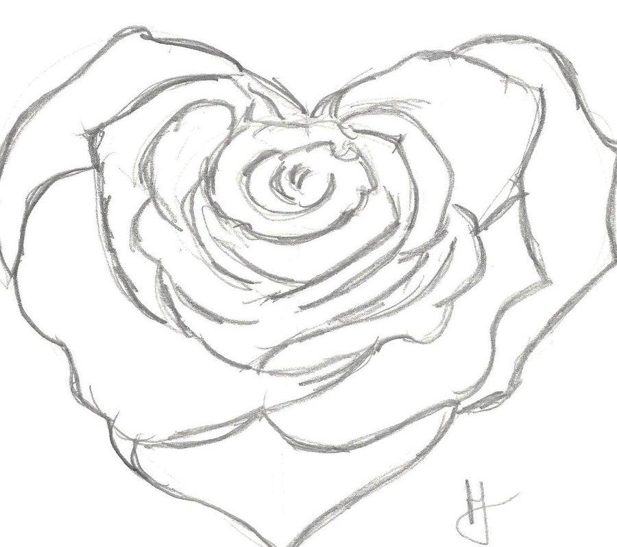 900x799 Heart Rose By Halsie93