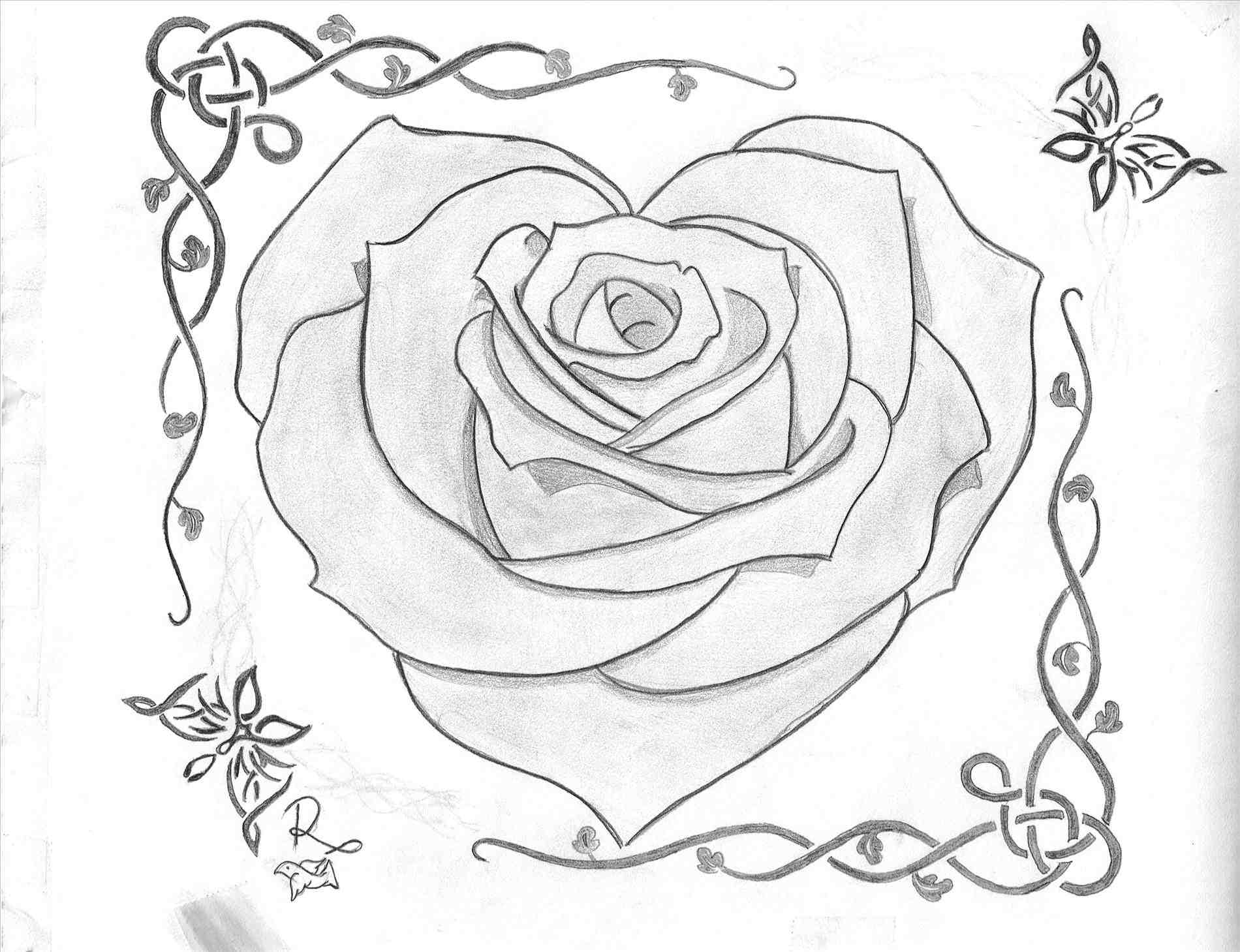 1900x1459 Love Rose Drawing Images