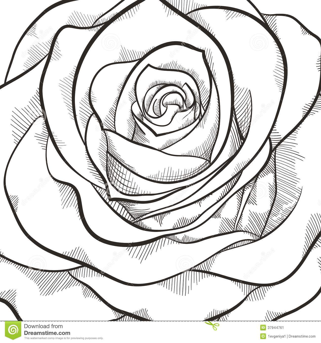 Roses Black And White Drawing
