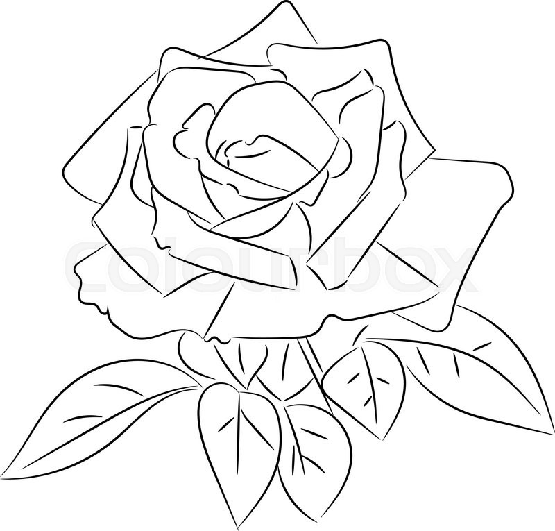 800x765 Black And White Roses Sketches, Vector Illustration. Stock