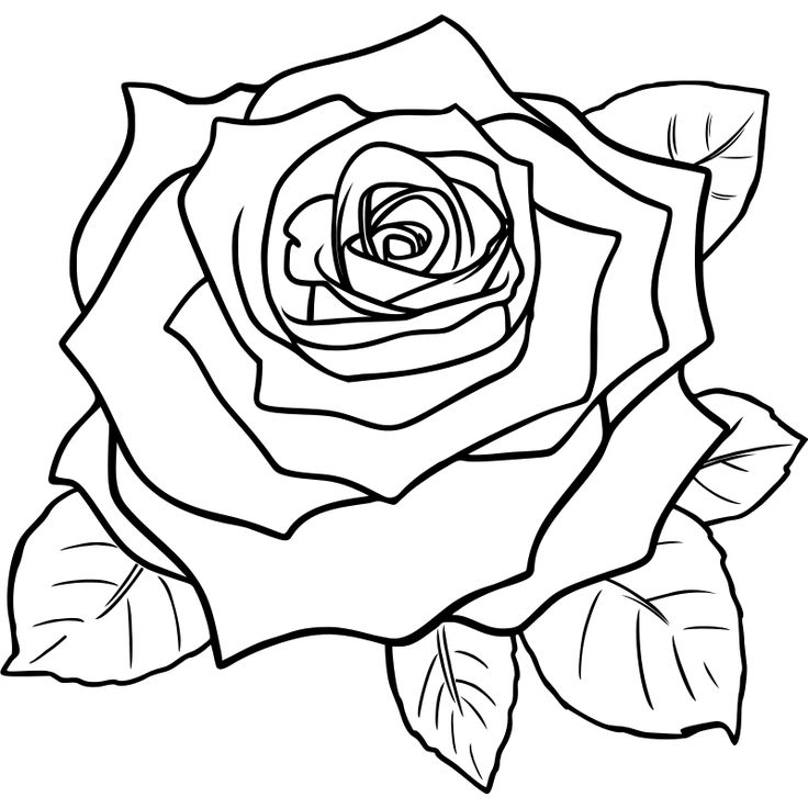 736x736 Rose Black And White Clipart